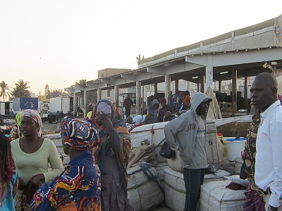 Refrigerated truck of the export plants are in competition with the women for access to the fish landings